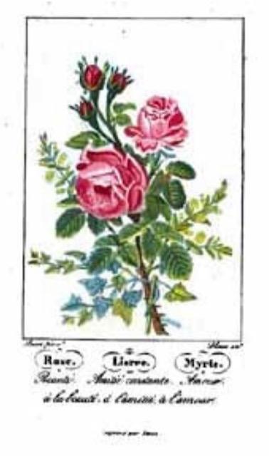 花楽のフラワーデザイン雑感から引用したシャルロット・ド・ラトゥール「花ことば」の画像