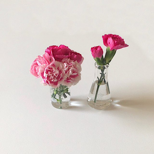 花びらアートに使ったスプレーカーネーションを私が撮影した写真
