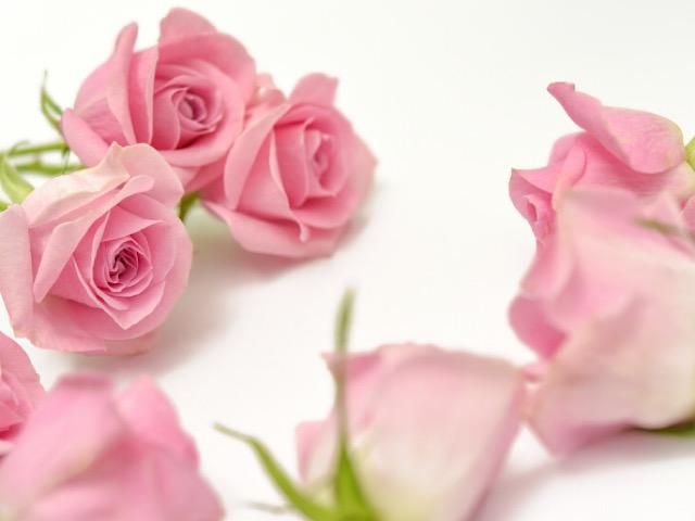 写真ACから引用したバラの画像