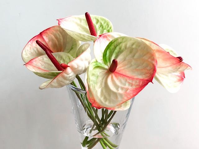 中目黒のおしゃれ花屋FLOWERS NEST(フラワーズ・ネスト)で購入したアンスリウムの写真