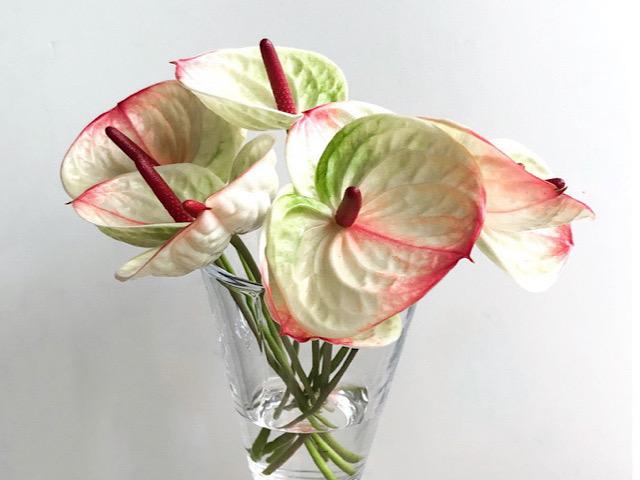 アンスリウムの花を飾ったのを撮影した画像