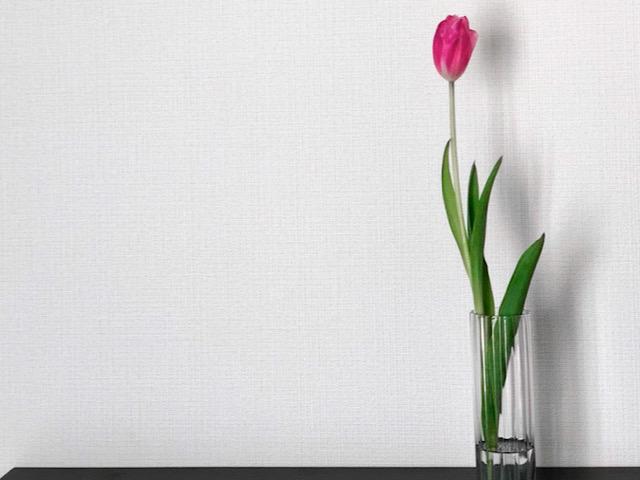 チューリップを飾った一輪挿しを自宅で撮影した画像