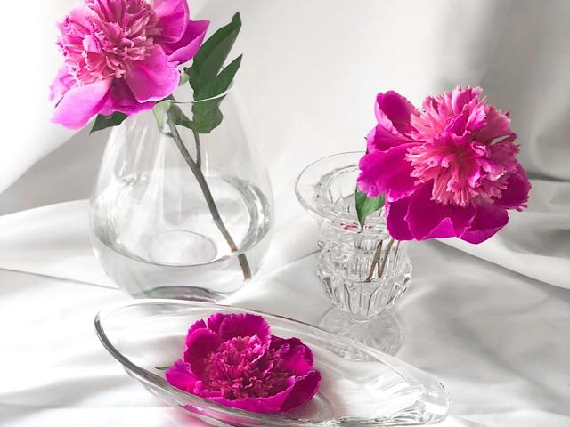 自宅の花瓶にいけたシャクヤクの写真