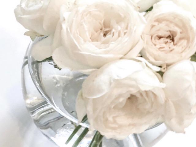 花びらアートに使った白いバラを撮影した画像