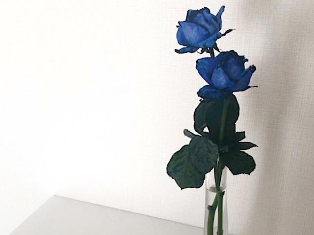 花びらアートに使った青いバラを撮影した画像