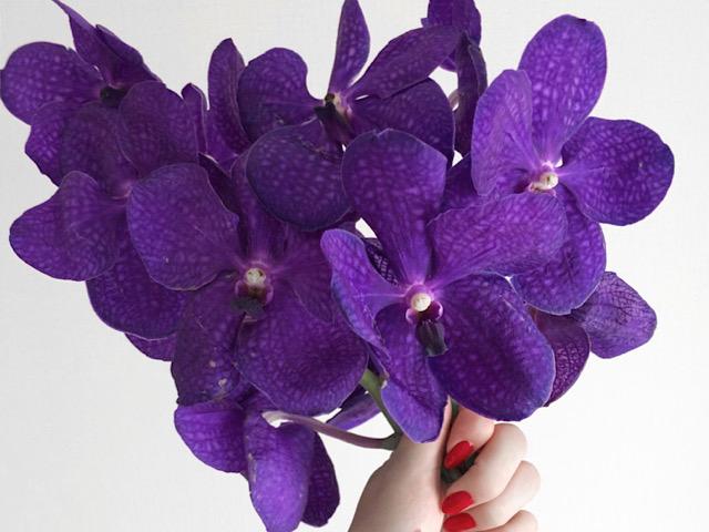 8月におすすめの切り花バンダの画像